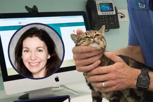UK's first dedicated ophthalmology referral clinic for cats