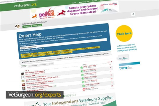 Veterinary experts step up to support GP veterinary surgeons