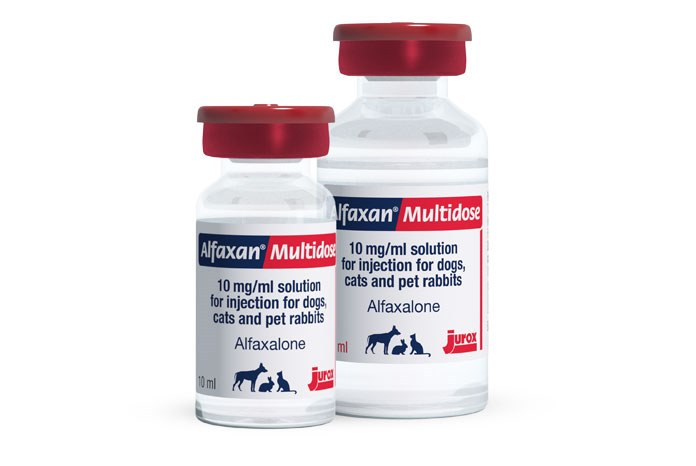Jurox has announced the launch of Alfaxan Multidose for dogs, cats and pet rabbits, a preserved formulation of alfaxalone with an extended shelf life of 28 days after the vial is first broached.