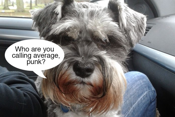 Research published by the Royal Veterinary College in Canine Genetics and Epidemiology has found that the Miniature Schnauzer is one of the most average dog breeds in the UK