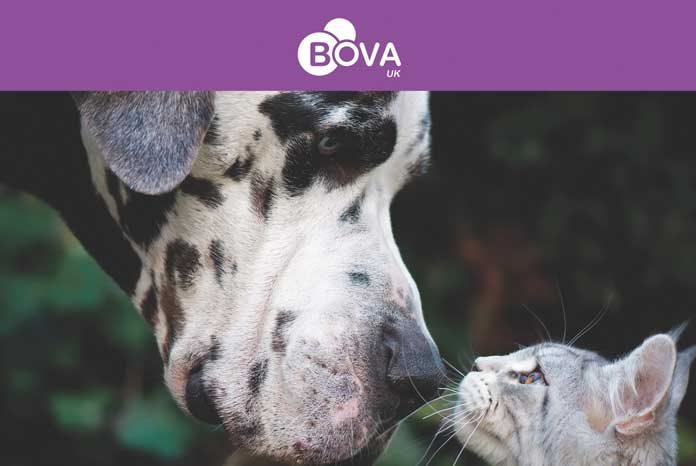 Bova UK has launched a range of pharmaceutical specials for the small animal market.