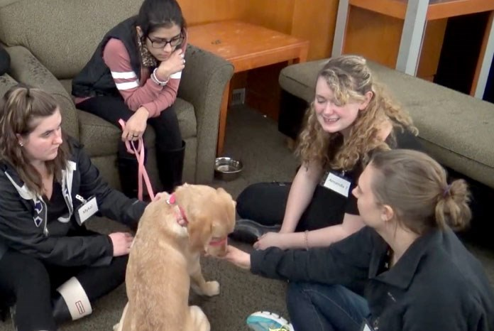 therapy dogs can improve the executive function and cognitive ability of university students at risk of academic stress and failure